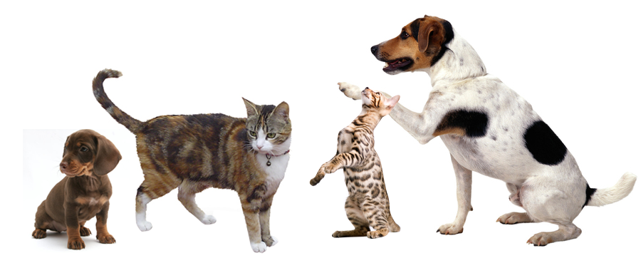 cats_dogs_banner